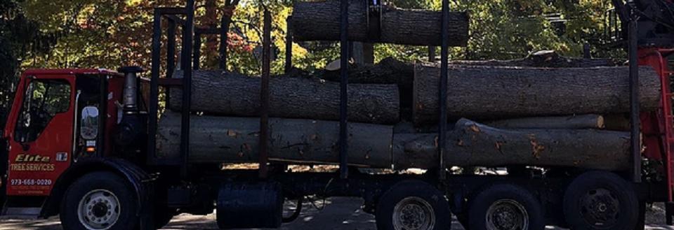 Elite Tree Service in Kenvil NJ