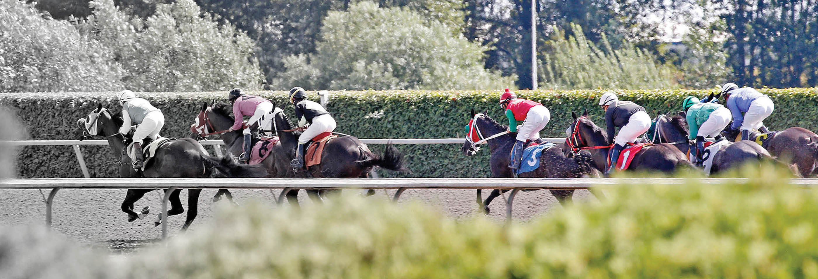 Emerald Downs main banner image - Auburn, WA - Racetrack & Casino