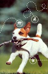 DOG, PET, ANIMAL CLINIC, VETERINARY SERVICES, VET SERVICE