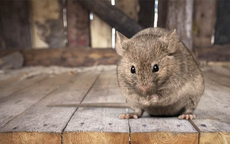 rodent proofing services california