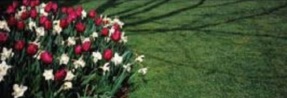 photo of tulips and lawn maintained by Ever So Green in Howell, MI