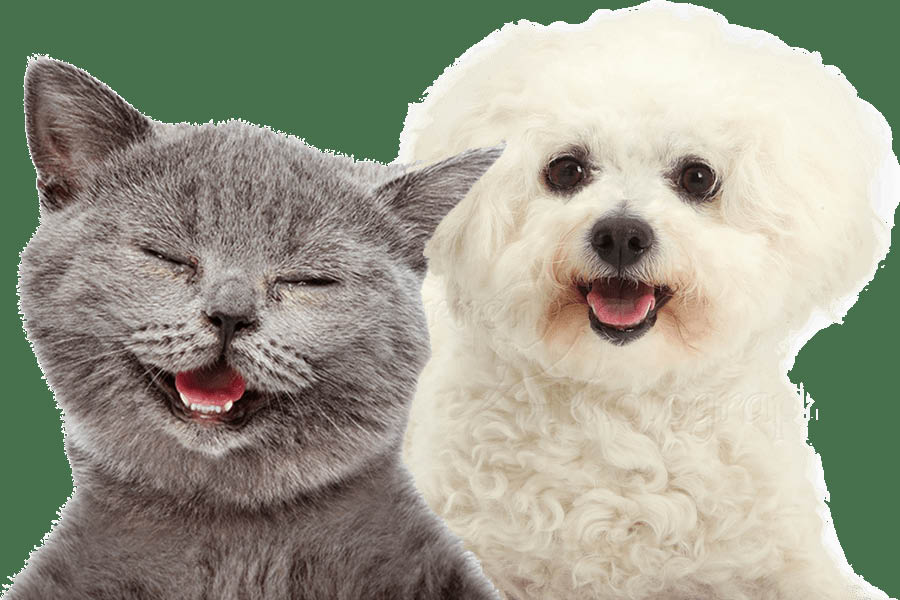 Everett Veterinary Hospital provides quality veterinary care to dogs and cats - caring veterinary hospital - Everett veterinarians near me - veterinarians in Everett, WA - veterinary coupons