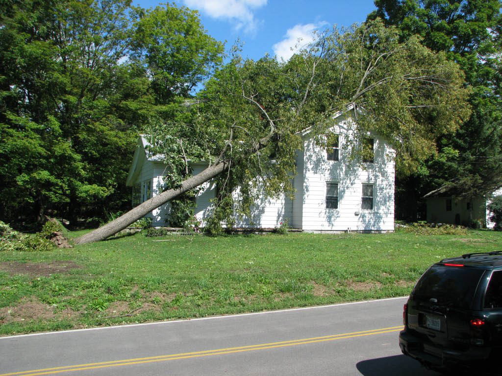 Emergency Service Tree Removal Expert Tree Rochester NY