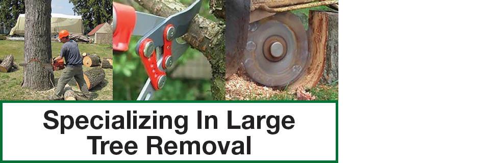 expert tree service rochester ny valpak banner