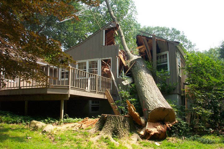 Tree removal or service coupon from Expert Tree Rochester ny