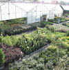 Tremendous variety of quality trees, quality products with plant guarantee, knowledgeable plant experts, shrubs, trees, plants