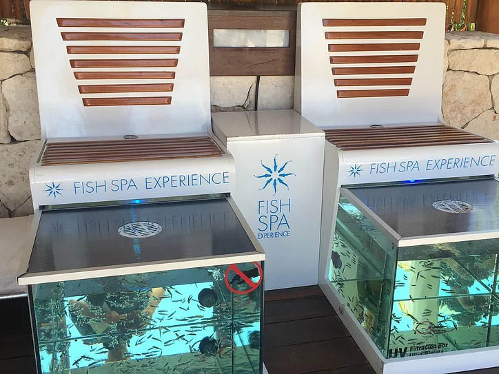 relax with fish fish spa fish foot cleanse ionic cleanse