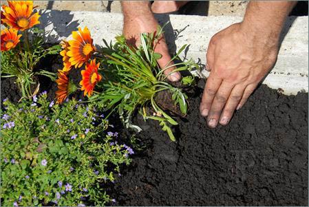 Flower Bed, Planting