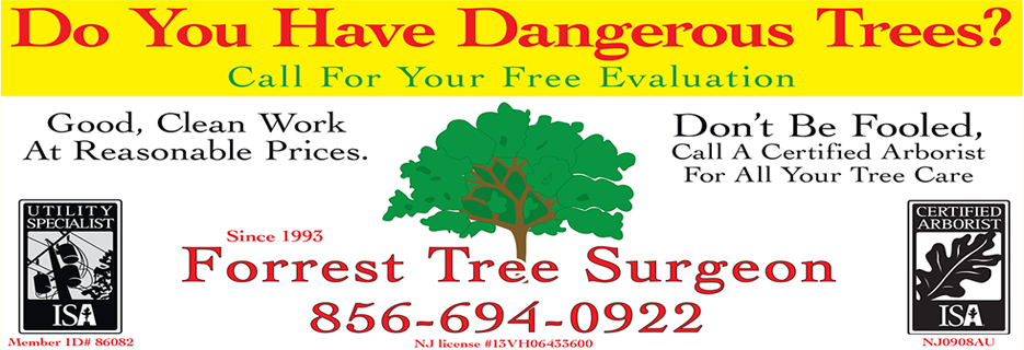 Forrest Tree Surgeon in Franklinville, NJ banner