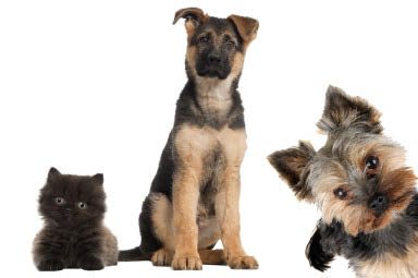 Franklin Falls Animal Clinic Indianapolis, IN discount vet coupon