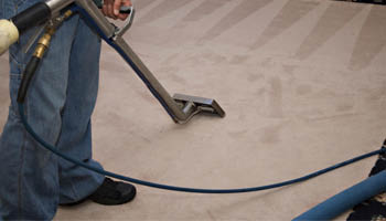 Fuzzy Wuzzy Rug Cleaning Co. steam carpet cleaning