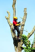 Tree trimming, tree service near Oakville, MO