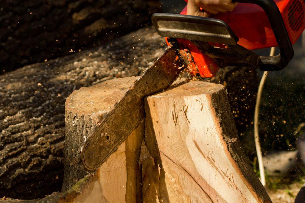monster tree service stump removal louisville kentucky