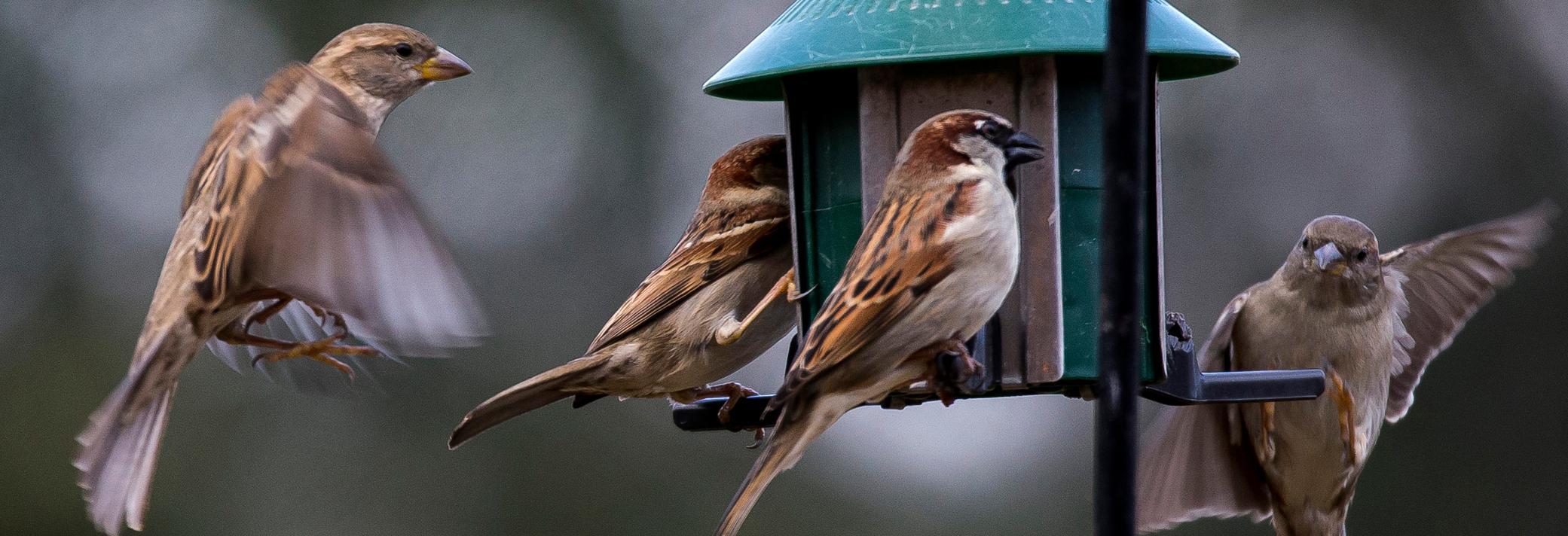 wild birds unlimited bird seed bird feeders florence kentucky