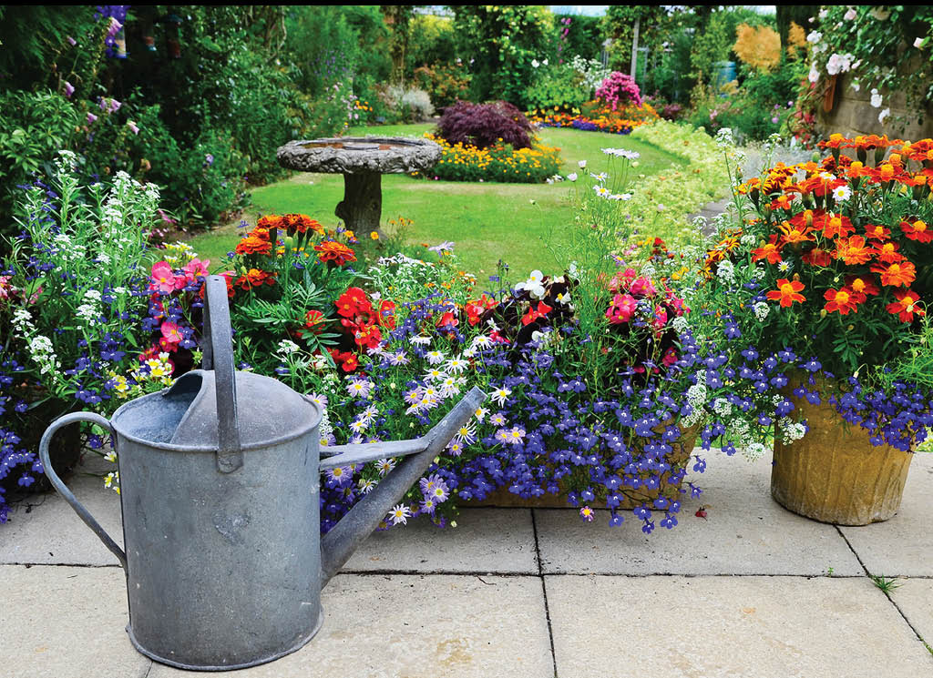 Flowers to make your Garden Beautiful