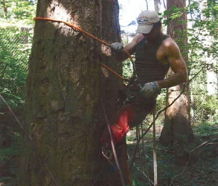 Tree removal companies near me - Wright's Logging & Tree Service - Graham, Washington - professional tree removal & logging