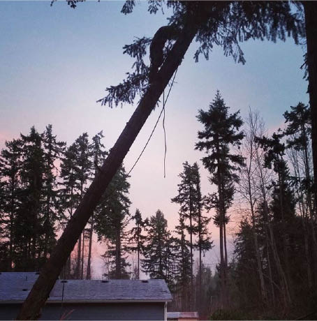 Tree trimming - tree pruning - tree removal - stump grinding - Wright's Logging & Tree Removal - Graham, WA