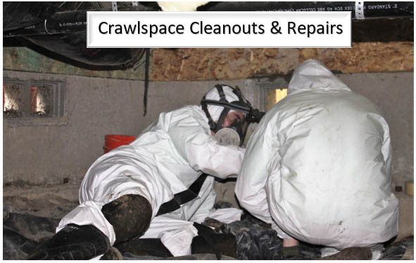 Green City Pest Control - crawl space and attic cleanout and repairs - Maple Valley - Seattle area exterminators