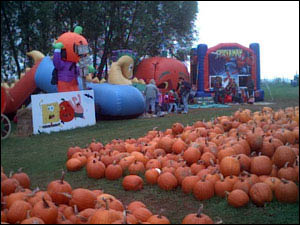 Pumpkins and Halloween go together like kids and candy. Thousands and thousands of pumpkins from mini size too big monsters to choose from! Great fun for the family at our farm the entire month of October!
