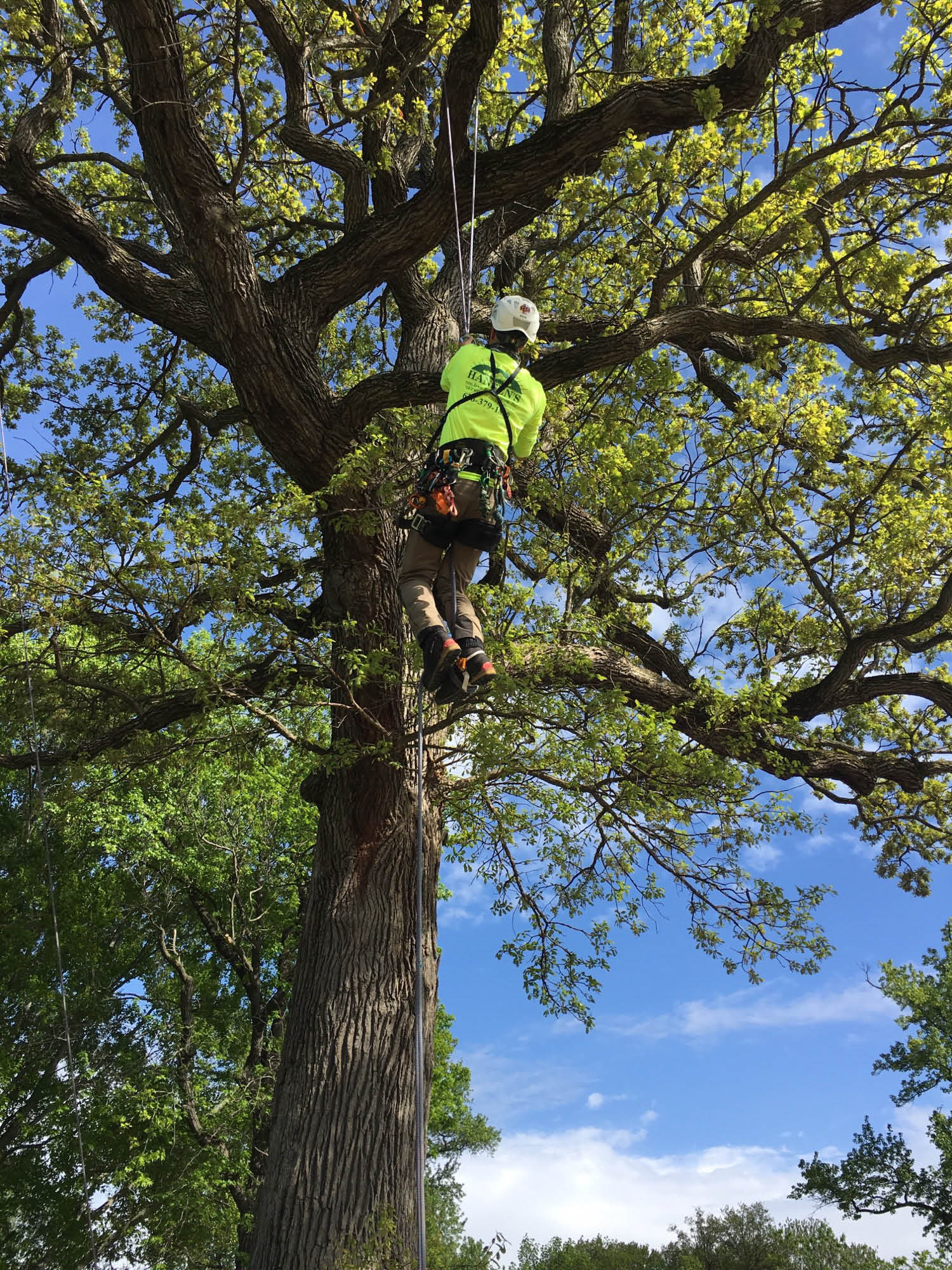 Tree pruning & trimming in St. Louis, MO