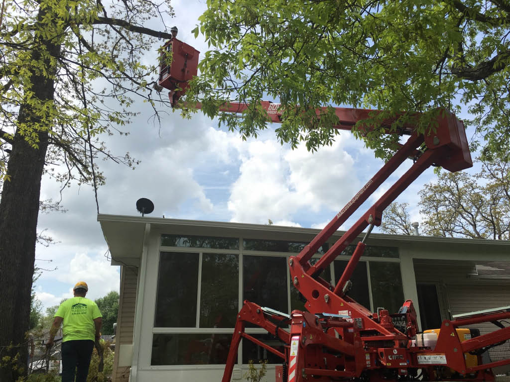 Heavy equipment used for dangerous limb removal away from power lines