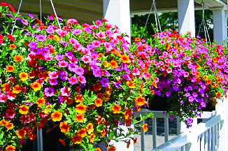 Hanging Plants available at Heaven Hill Farm in Vernon NJ