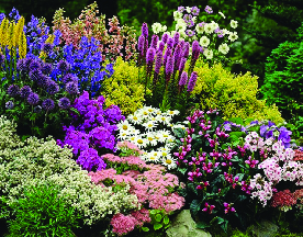 Perennials available at Heaven Hill Farm in Vernon NJ