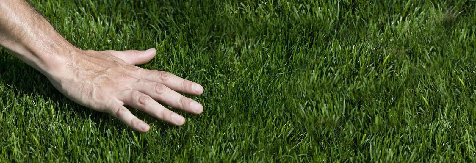 Henderson fertilizing,fertilizing near me,fertilizing,seed planting,grass seeding,fertilizer