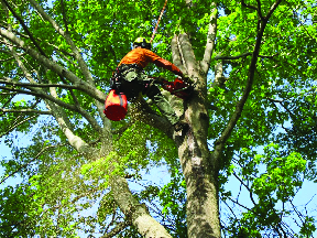 Tree Service provided by High Class Tree Service & Landscaping in Wharton NJ