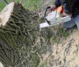 photo of chain saw at base of tree serviced by Hill Top Tree Service in Westland, MI