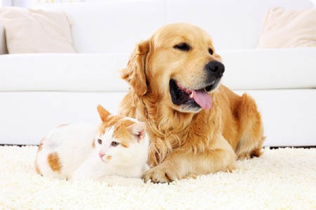 Cat and dog pet stain and odor removal service in CO