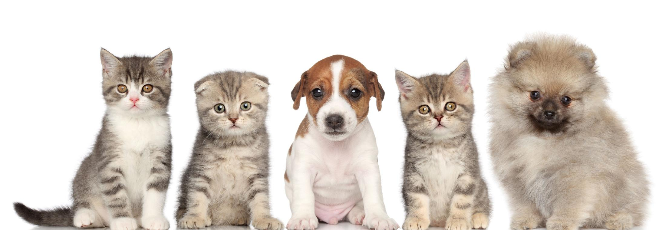 animal hospital, veterinary, surgical, diagnostic, pets, cats, dogs