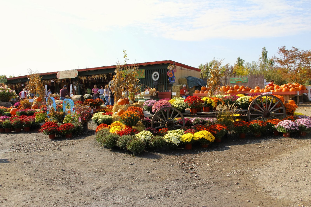 Beautiful flowering plants make for a colorful Fall Festival