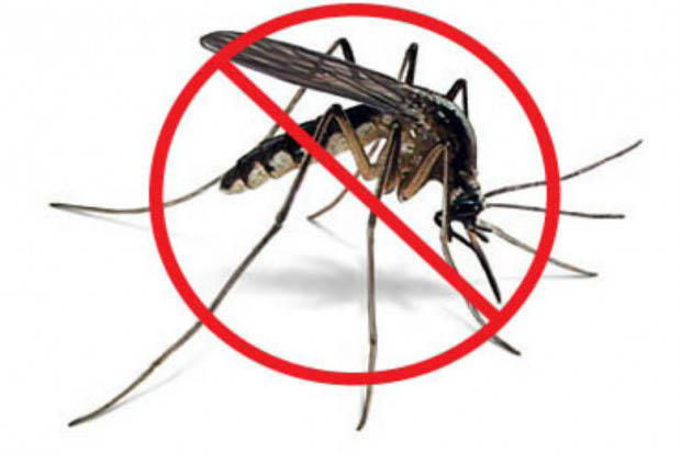 We Kill Mosquitos. The main benefit of working with our treatment services will be allowing you and your family to enjoy the great outdoors during the summer!