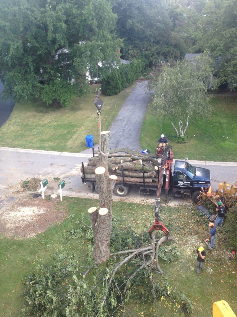 promo code 600 Stump grinding service JM Tree Rochester ny