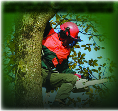 Photo of tree pruning with J R's Lawn & Tree Service in Pittsburgh PA