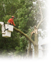 Photo of tree trimming service with bucket truck from J R's Lawn & Tree Service in Pittsburgh PA