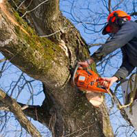 M&M Tree Experts in Lawrenceville, GA
