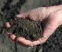 Handful of black dirt