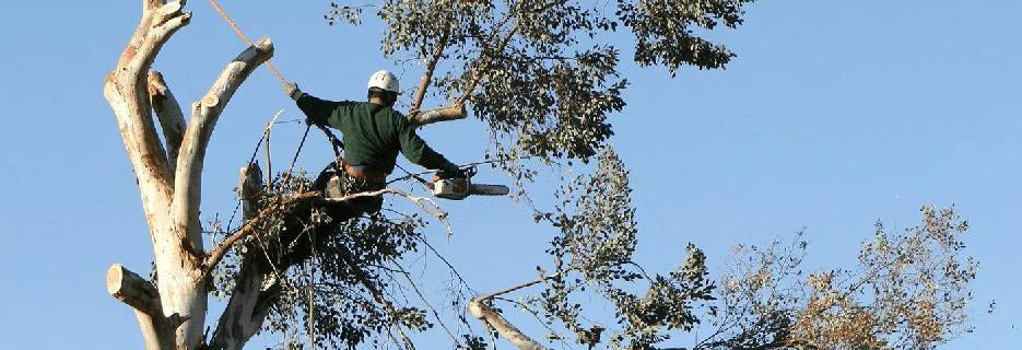 photo of man trimming trees from K & S Tree Service