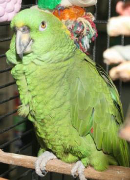 photo of bird at Kee's Aquarium & Pets in Shelby Twp, MI