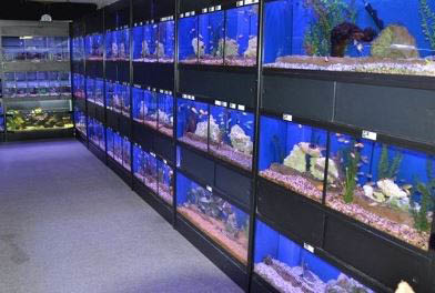 photo of aquariums at Kee's Aquarium & Pets in Shelby Township, MI