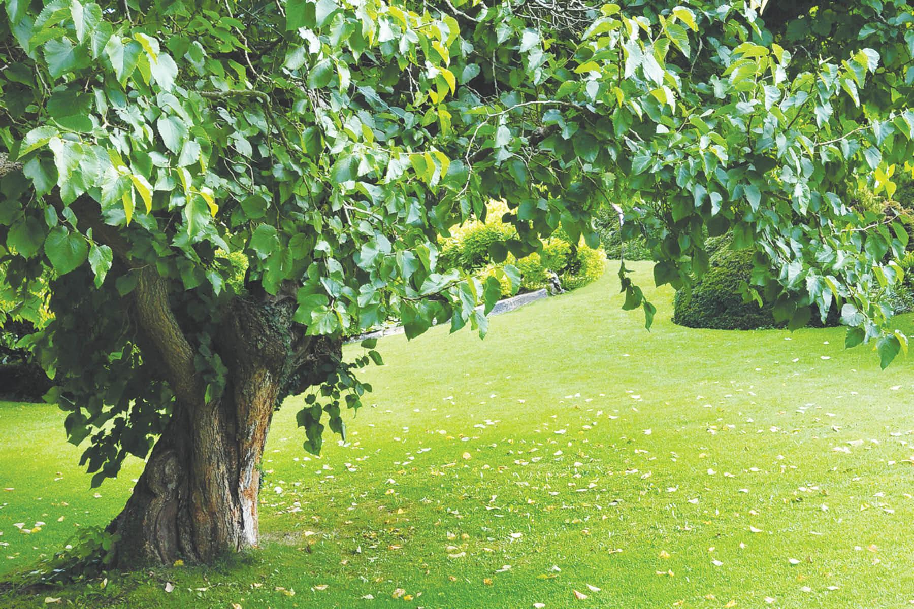 tree services; Kelly McConkey's Tree Service serving maryland