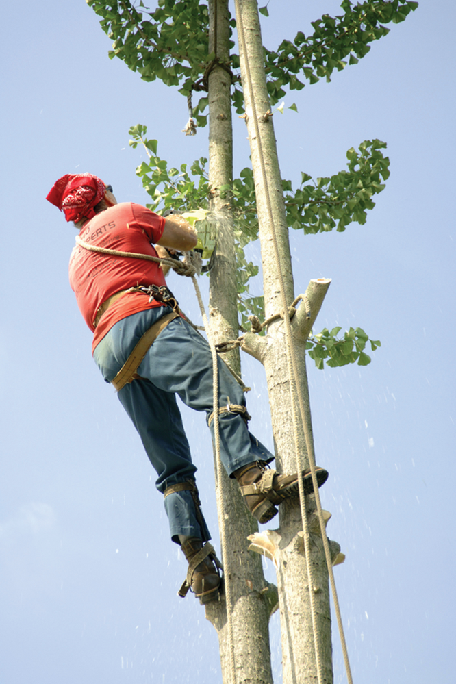 tree trimming; Kelly McConkey's Tree Service serving maryland
