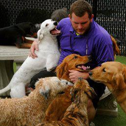 Kennel Creek Pet Resort, pet resort in kansas city, pet resort in overland park, dog day care in overland park, doggie day care in overland park, dog training, pet grooming in overland park, short-term boarding, extended-stay boarding, pet boutique
