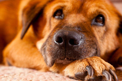 A Pet Clinic of Kent - veterinary clinic - veterinarians - care for dogs and cats - pensive dog
