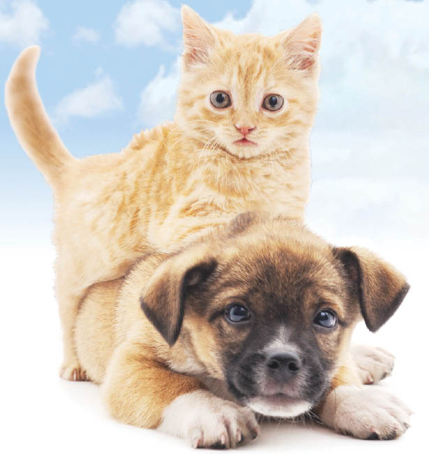 local rescue shelters, pet shelters in Phoenix, AZ