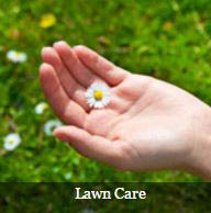 Beyond indoor pest control, we also work on lawn care.