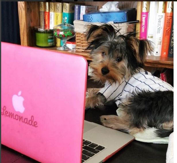 So easy, a dog could use a laptop to get Lemonade insurance