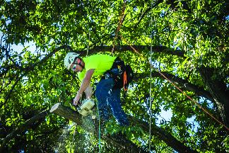 Liscombe has professional tree climbers to help remove tree limbs